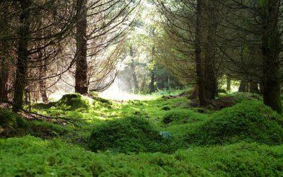 Luonnon monimuotoisuuden suojelu 5 op (OY)