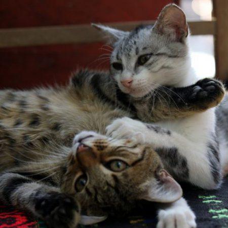 Onnellinen kissa –seminaari