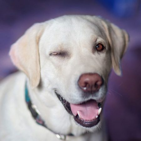 Koiran elekieli ja stressi