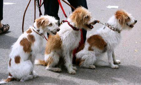 Rähjäämätön ja arkailematon koira (BAT 2.0) –seminaari