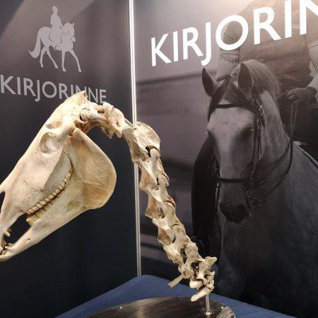 Hevosen biomekaniikan perusteet 5 op