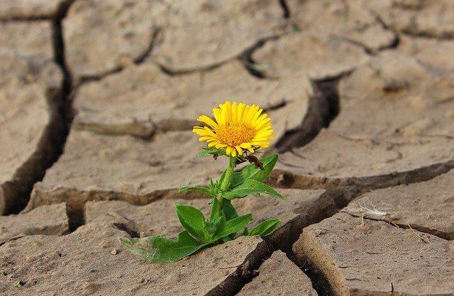 Psyykkisen resilienssin työkalupakki (verkko-opetus)